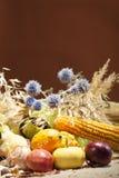 Colección del otoño Fotografía de archivo libre de regalías