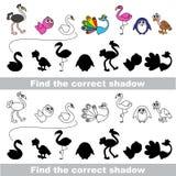 Colección del pájaro Encuentre la sombra correcta Imagen de archivo