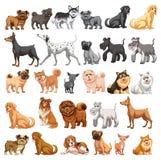 Colección del perro Foto de archivo