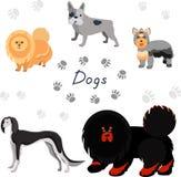Colección del perro Fotografía de archivo