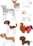 Colección del perro de la historieta Fotos de archivo