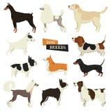 Colección del perro Estilo geométrico Sistema del vector de 11 razas del perro Imagen de archivo libre de regalías