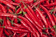 Colección del primer de chiles rojos brillantes brillantes Foto de archivo libre de regalías