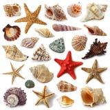 Colección del Seashell foto de archivo libre de regalías