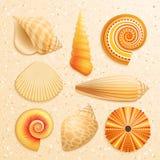 Colección del Seashell en fondo de la arena Imágenes de archivo libres de regalías