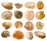 Colección del shell Fotografía de archivo libre de regalías