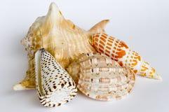 Colección del shell Foto de archivo libre de regalías