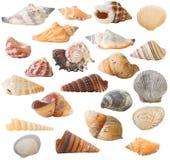 Colección del shell, aislada fotografía de archivo libre de regalías