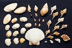 Colección del shell del mar Imagenes de archivo