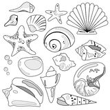 Colección del shell del mar Foto de archivo libre de regalías