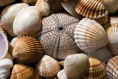 Colección del shell del mar Foto de archivo