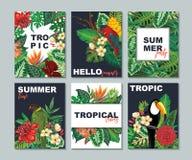 Colección del vector con seis tarjetas, notas y banderas con el tucán, flores exóticas, plantas y hojas ilustración del vector