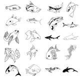 Colección del vector de 30 tipos de los pescados stock de ilustración