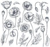 Colección del vector de flores dibujadas mano de la amapola stock de ilustración