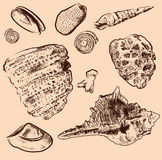 Colección del vector de la cáscara del mar Mano original drenada Foto de archivo libre de regalías