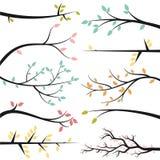 Colección del vector de ramas de árbol Imagen de archivo libre de regalías