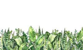 Colección del verdor de la acuarela Contexto horizontal ilustración del vector