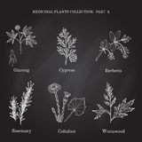 Colección del vintage de hierbas y de plantas médicas dibujadas mano ciprés, berberis, ginseng, romero, ajenjo, coltsfoot libre illustration