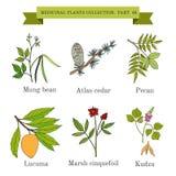 Colección del vintage de hierbas y de plantas medicinales dibujadas mano libre illustration