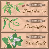 Colección determinada del Aromatherapy ilustración del vector