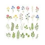 Colección dibujada mano floral del herbario Foto de archivo libre de regalías
