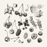 Colección dibujada tinta de bayas Fotos de archivo libres de regalías