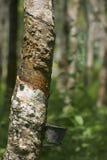 Colección en una plantación de goma, Malasia del látex Imagen de archivo libre de regalías