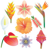 Colección exótica de las flores Imágenes de archivo libres de regalías