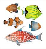 Colección exótica de los pescados Imagenes de archivo