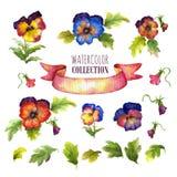 Colección floral de la acuarela con los pensamientos multicolores Hay flores, hojas, brotes, cinta de satén Foto de archivo