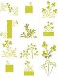 Colección floral del fondo Stock de ilustración
