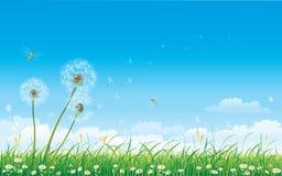 Colección floral del prado stock de ilustración