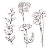 Colección floral del vector La mano dibujada fijó las flores y las hojas Composición floreciente ilustración del vector