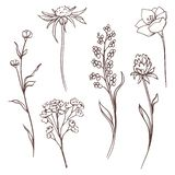 Colección floral del vector La mano dibujada fijó las flores y las hojas Composición floreciente stock de ilustración