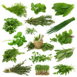 Colección fresca de las hierbas Foto de archivo libre de regalías