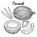 Colección gráfica del coco stock de ilustración