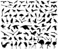 Colección grande aislada fauna del vector de los pájaros libre illustration
