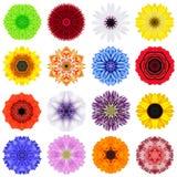 Colección grande de diversas flores concéntricas aisladas en blanco Foto de archivo