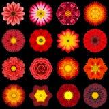 Colección grande de diversas flores rojas del modelo aisladas en negro Imagen de archivo libre de regalías