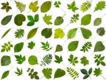 Colección grande de diversas hojas verdes Foto de archivo libre de regalías