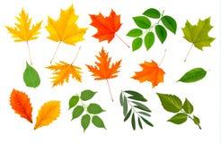 Colección grande de hojas coloridas. Foto de archivo libre de regalías
