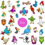 Colección grande de los caracteres animales de los pájaros de la historieta ilustración del vector