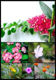 Colección hermosa y colorida de flores imágenes de archivo libres de regalías