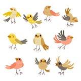 Colección linda de los pájaros Fotografía de archivo libre de regalías