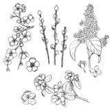 Colección natural dibujada mano de la primavera stock de ilustración