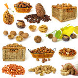 Colección Nuts Foto de archivo libre de regalías