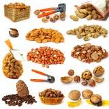 Colección Nuts en blanco Imágenes de archivo libres de regalías