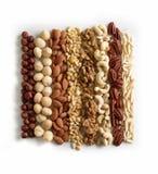 Colección Nuts en el fondo blanco Foto de archivo