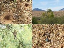 Colección o collage meridional de Arizona Fotografía de archivo
