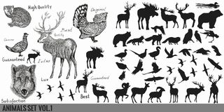 Colección o sistema estupenda enorme de la mano del vector dibujado detallado para libre illustration